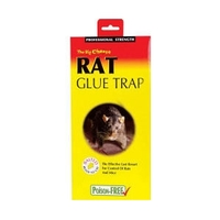 Big Cheese Rat Glue Trap