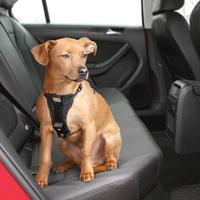 Kurgo Enhanced Tru-Fit Smart Harness Including Seat Belt Tether
