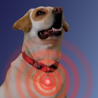 Nite Ize Spot Lit - LED Collar Light - White LED