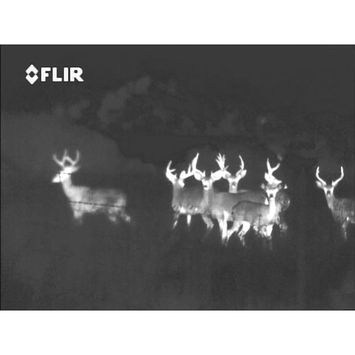 flir scout ps32 thermal imaging camera. Black Bedroom Furniture Sets. Home Design Ideas