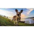 Image of GoPro Tripod Mounts
