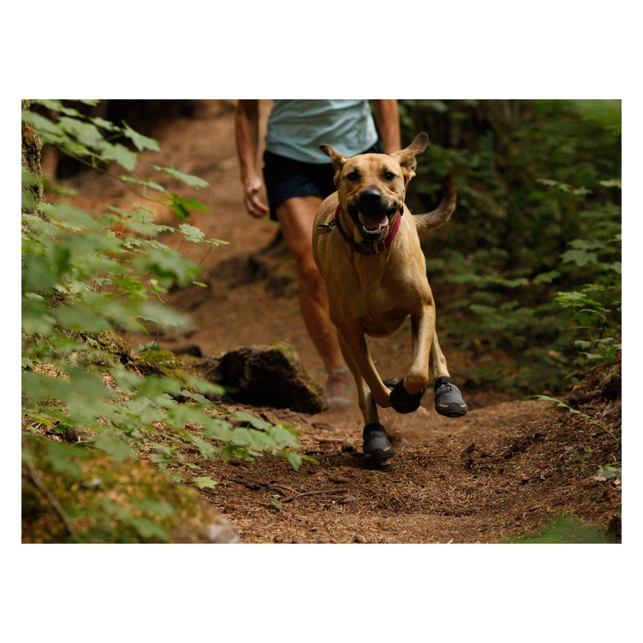 http://static5.uttings.info/images/products_additional/ruffwear/bark-n-boots-gr_D9B012B4_large.jpg